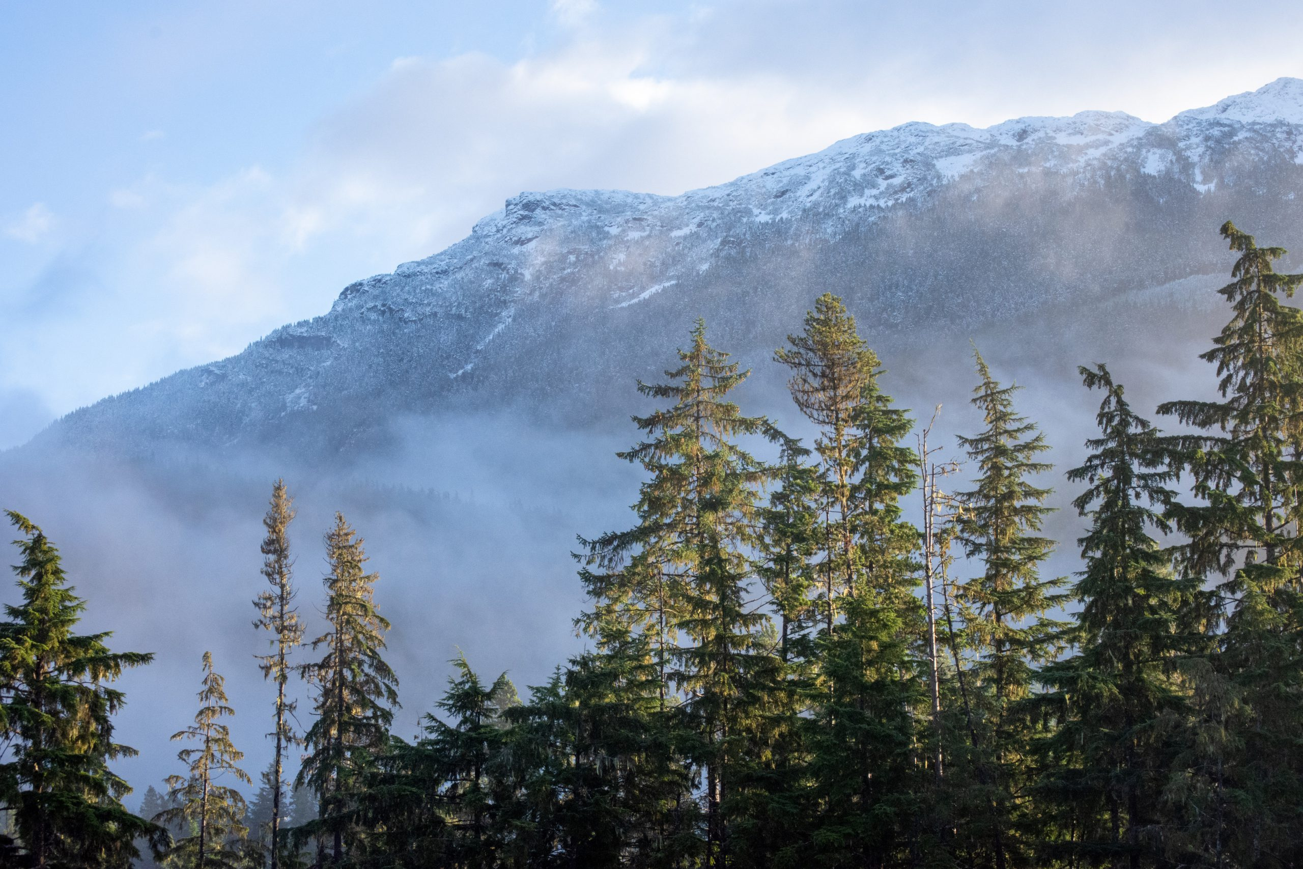 British Columbia forest trees and snowy mountain